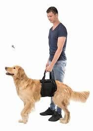 Hebehilfe für Hunde
