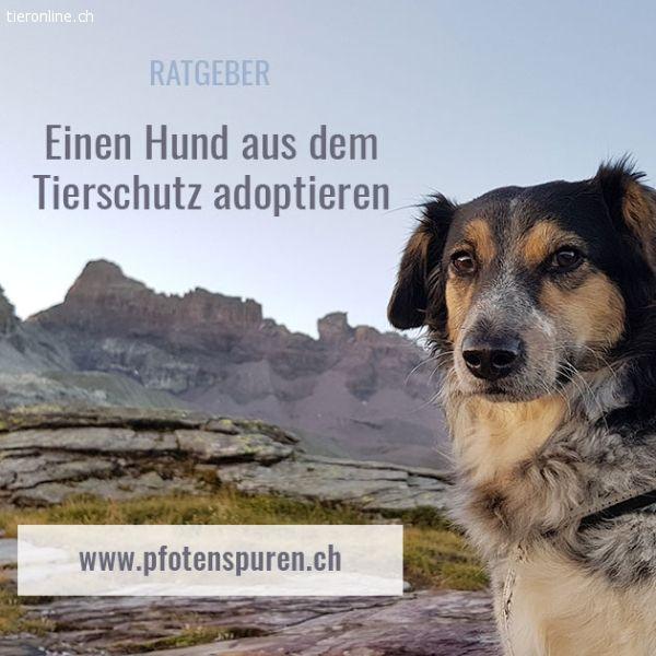 """Corinne Meister """"Pfotenspuren:"""" Einen Hund aus dem Tierschutz adoptieren Ratgeber"""
