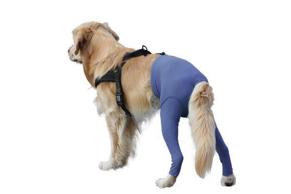 Safety Pants Schutz bei Läufigkeit oder Inkontinenz VetMedCare