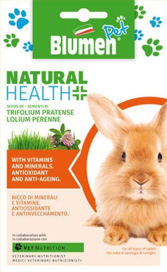 Kaninchen Rotklee (Trifolium pratense)