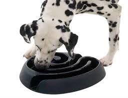 DogMaze Futterlabyrinth für Tiere bis 10kg