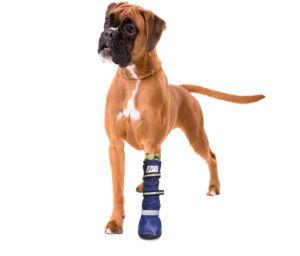 Pfoten-Verbandschutz, wasserfest, Medical Pet Boot