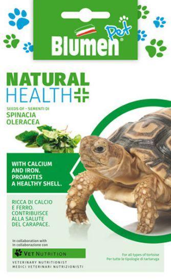 Schildkröten Spinat (Spinacia oleracea)